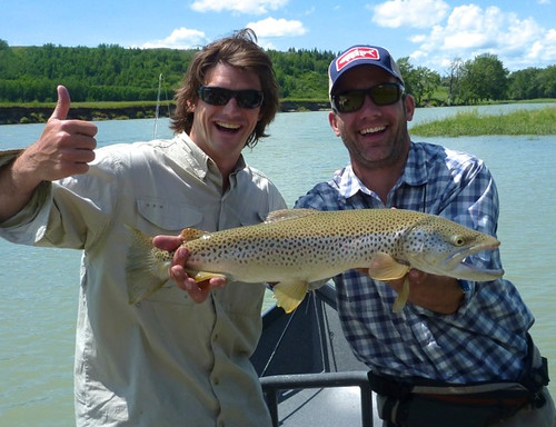 1281114e553c Picture of the Day  25-inch Bow River Brown Trout - Orvis News
