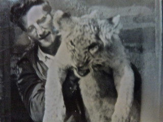 bill-scott-lion-image