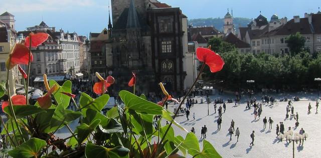 Kukka ikkunalla Prahassa