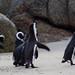Penguin Shakedown