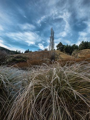 winter sky grass clouds lawrence bravo poplar frost dam nz otago