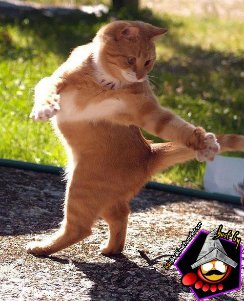 gambar kucing 08