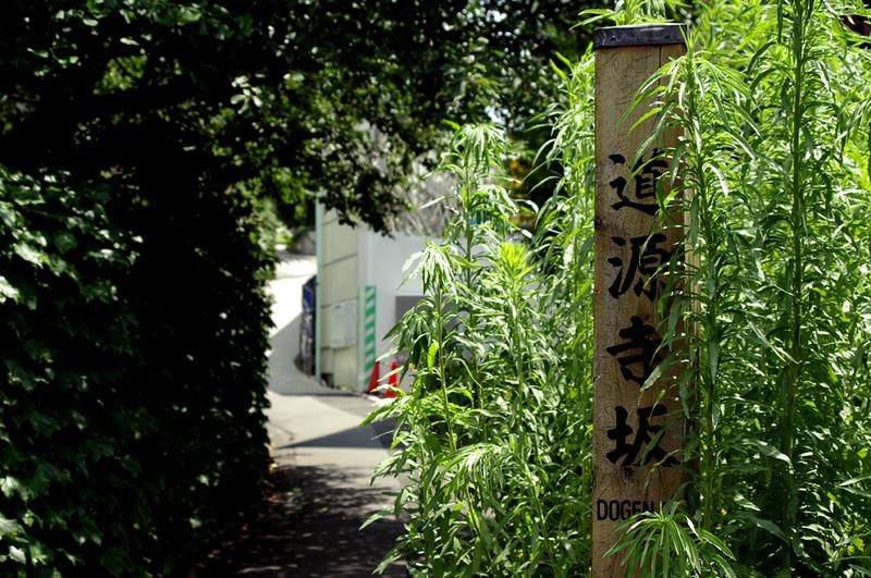 2012_07_19 12_40_53_道源寺坂