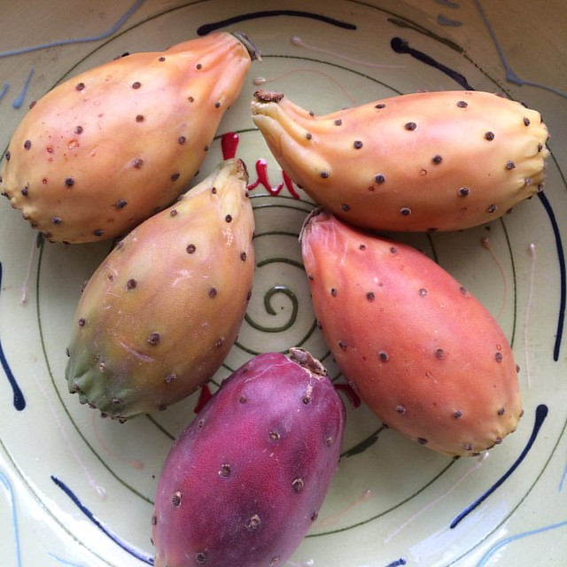Very exotic fruit #pricklypear #cactusfruit