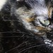Small photo of Cat's Eyes