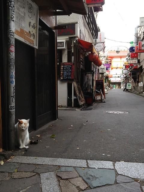 歌舞伎町の猫 -Kabukicho