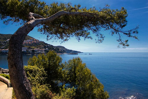 Tree & Sea View