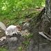 Small photo of An albino squirrel!
