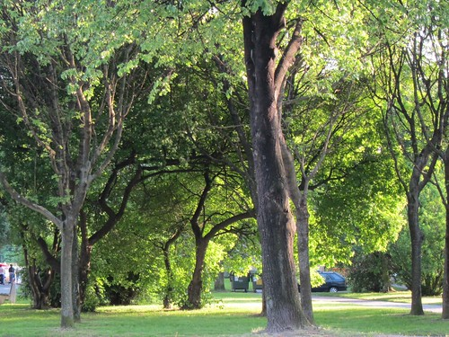 Poruban puistoja by Anna Amnell