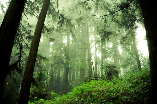 Forests of Alishan-8