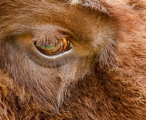 The eyes are often the most important element in a photograph.
