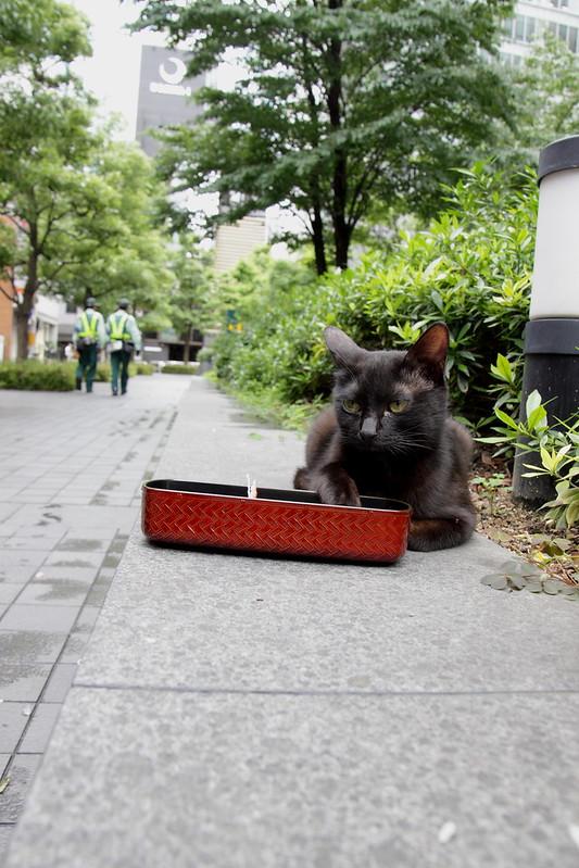 黒猫お弁当強奪隊 1