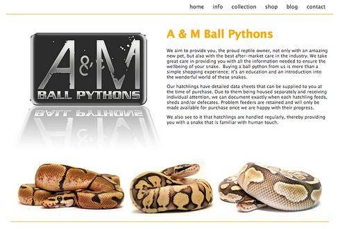 A&M Ball Pythons