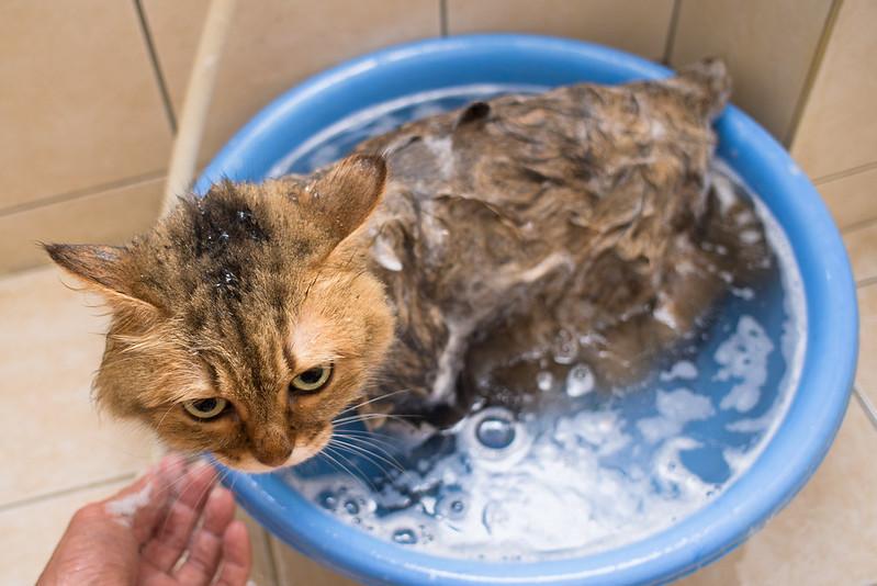NIKE在看正咩洗澡