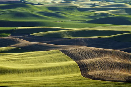 Palouse | Late June