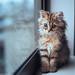 Cat in the Window by torode