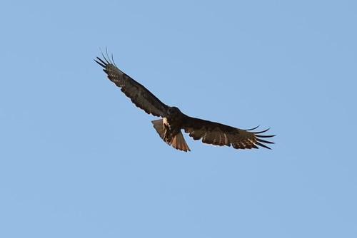 Bird in flight 1