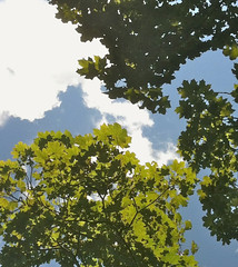 Composition with Branches, Clouds, and Sky by randubnick