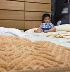 寝る前のとらちゃん (2012/7/12)