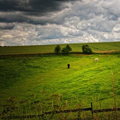 [Free Images] Nature, Field / Farm, Horses, Landscape - Denmark ID:201207201200