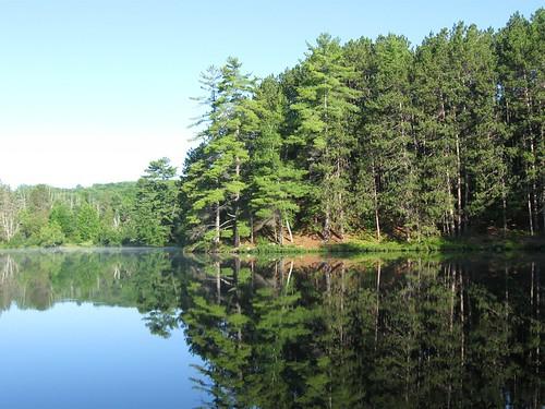 Pine Forest on Mirror