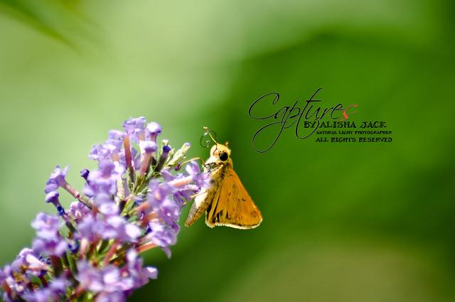 KM Gardens | 07/14/2012