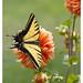 Mariposa I por Pablo Rodriguez M