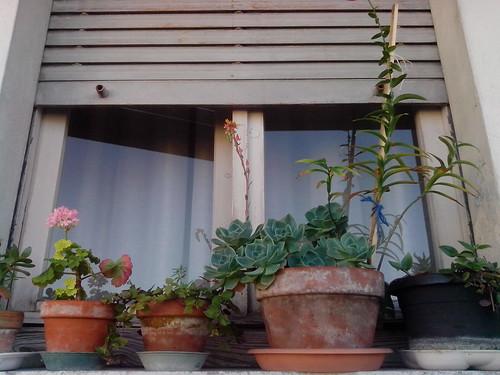 La finestra di fiori di Rosetta by Ylbert Durishti