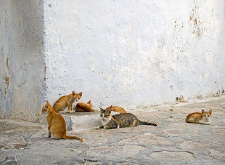 Family of Feral Cats