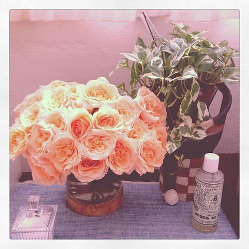 あふれるバラ