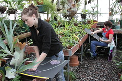 Drawing class in greenhouse