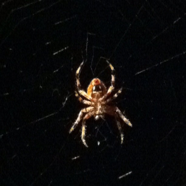 This is the belly of a spider with a big web on my back deck. Should I be concerned?