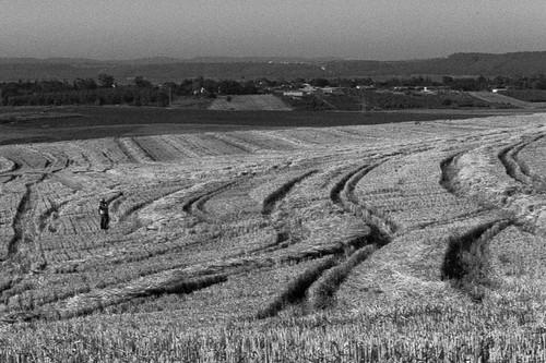 morning field view scenic hulda chebrutametzalemet karmeyoseph