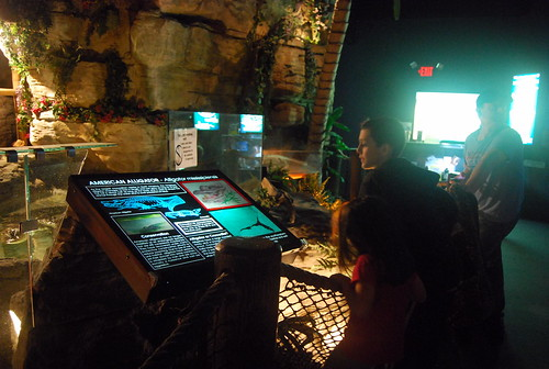 JA - alligator exhibit