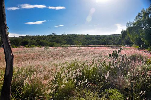 Chazumba, Agosto 2012 (107)