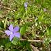 De petites fleurs bleues ©Sam Nimitz