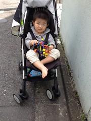 お散歩とらちゃん(2012/4/29)
