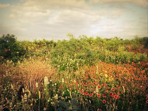 flowers summer landscape spring texas bees beekeeping beekeepers gbr apiary apiarist beekeeper texasbees gretchenbeeranch texasbeekeeping