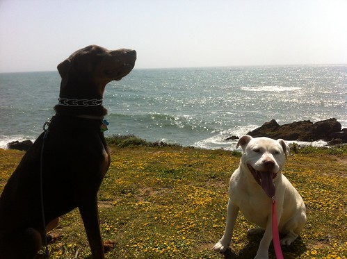 Bixby & Gomi by the Sea