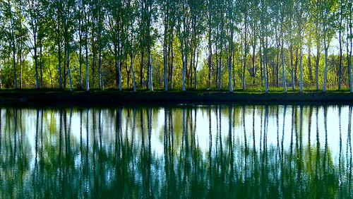 italy verde primavera nature river fiume piemonte aprile riflessi pioppi carignano fiumepo blinkagain