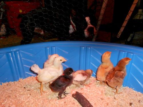 chicks_bentley