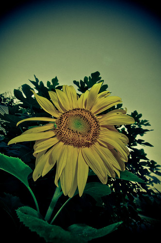 colors yellow lomo xpro angle wide super sunflower etsy ultrawide vignette catchy strobist