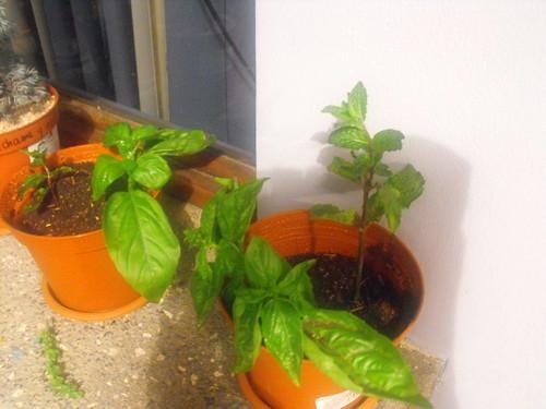 Plantitas bebés