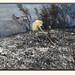 Río Henares 2012 - Incendio en Azuqueca
