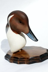 Pintail Bust