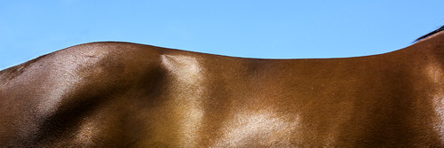 horse abstract landscape run 31 quail stables ratio