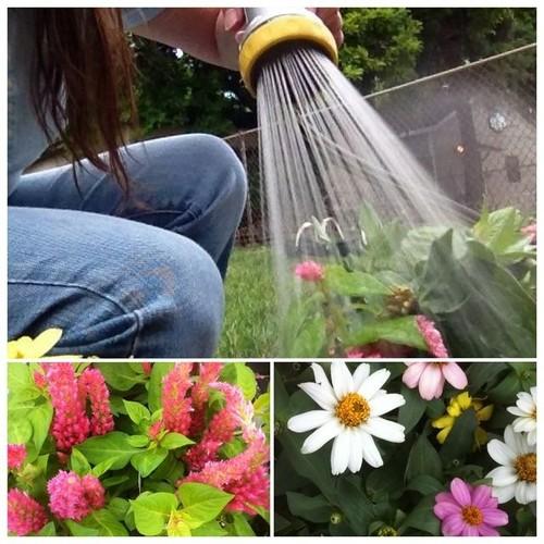 174-366 Gardening by Abigail Harenberg