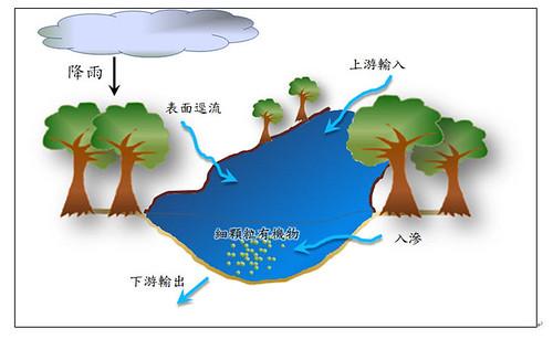 圖二、溪流流域細顆粒有機物傳輸示意圖