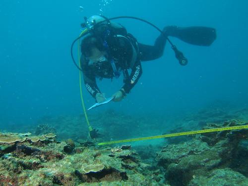 活動人員進行棘冠海星移除。(圖片來源:海管處)