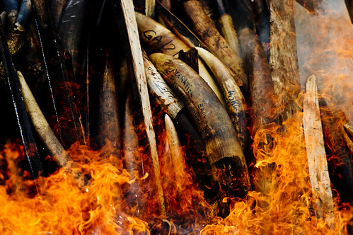 Gabon's stockpile of poached ivory goes up in flames